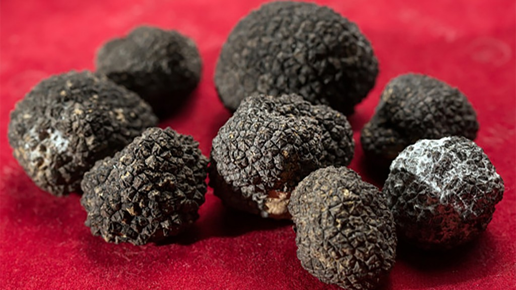 black-truffles-red-background_109285-2529